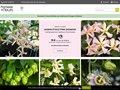 Vente de bulbes de fleurs et plantes de jardin en ligne et sur catalogue
