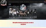Elevage de bulldogs américains et de Staffordshire bull terrier