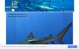 screenshot http://www.auxbulles.com a la découverte de la faune sous marine !