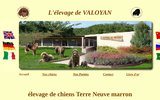 screenshot http://www.terre-neuve-marron.fr élevage de valoyan  terre neuve marron ou bronze