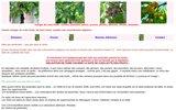 screenshot http://www.vraisfruits.net portail des vrais fruits cueillis à maturité