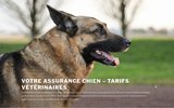 screenshot https://www.votre-assurance-chien.fr/ Comparateur assurances chiens