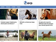 Dressage de chevaux en Bretagne