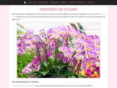 Détails : Orchidée en fleurs