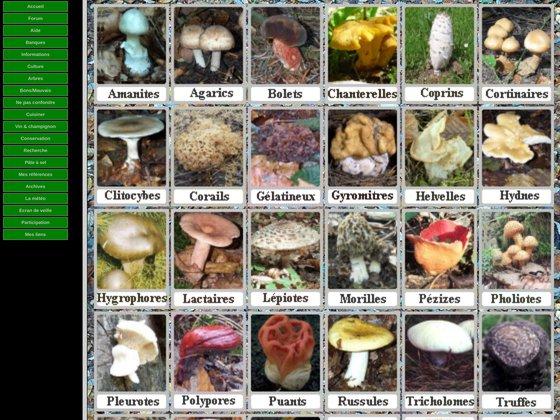 Les champignons de nos forêts